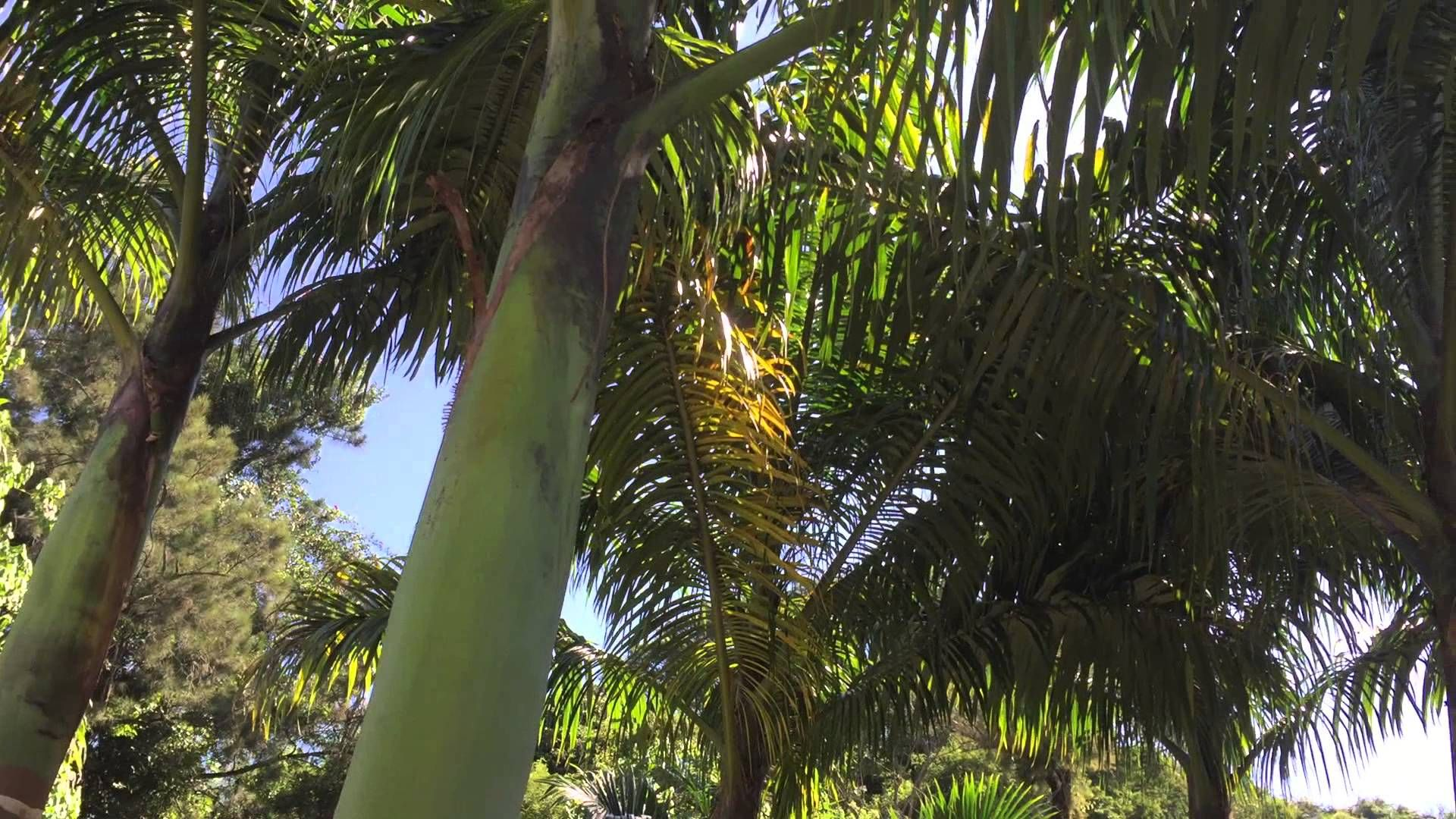 Tiguera 360: Vista da Sacada na Frente da Casa. IMG_8268. 504,4 MB. 09h5...
