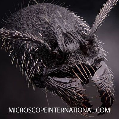 An ant head #antman #nyc #microscope