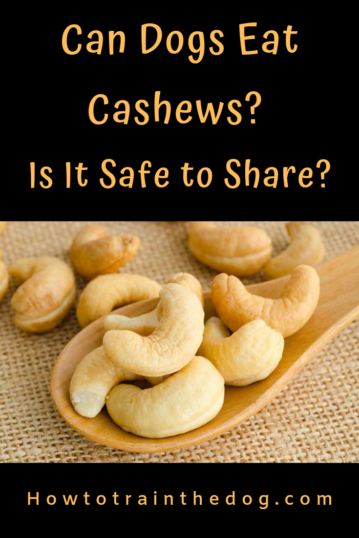 Can Dogs Eat Cashews? Is It Safe to Share? Can dogs eat