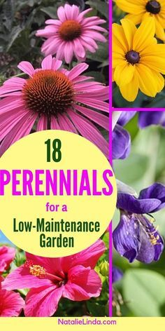 18 Low Maintenance Perennials -   11 garden design Patio summer ideas