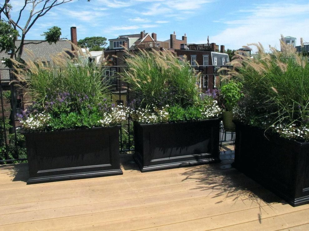 Deck Privacy Plants Great Idea For Your Outdoor Screen Ideas
