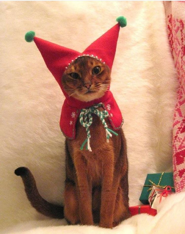 OK so youu0027ve dressed me in a u201cwool embroidered Meowy Christmas Holiday Elf Hood for cat plus free catnip toyu201d. When I hear the words u201cwool embroideredu201d I ... & Pin by rita hopkins on catu0027s | Pinterest | Cat Kitty and Funny ...