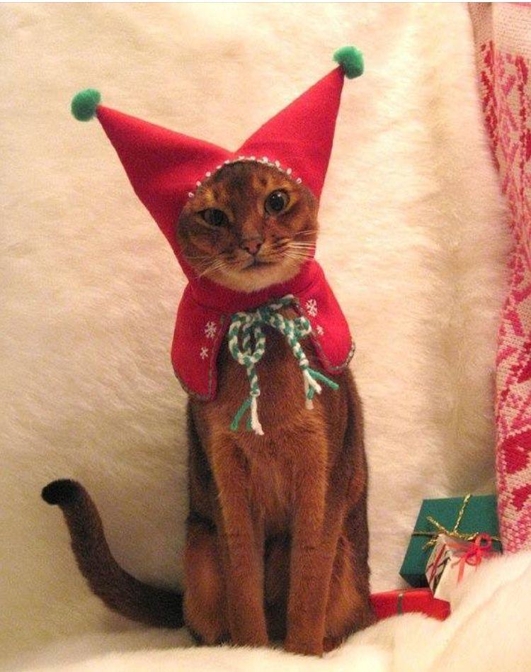 pet toys cute cats i love cats christmas animals christmas cats