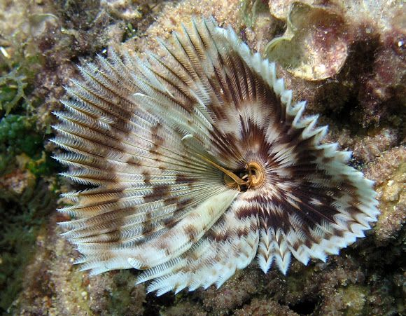 Feather Duster Worm Yep Definitely Looks Like The One We Have Feather Duster Animal Kingdom Waterworld