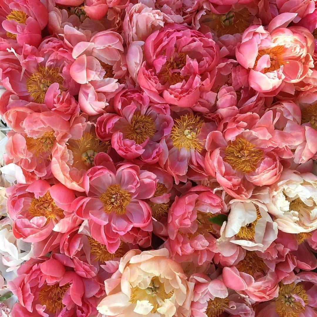 """Erin Benzakein Floret (floretflower) """"The very last"""