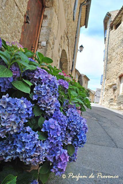 Parfum de Provence: hydrangea