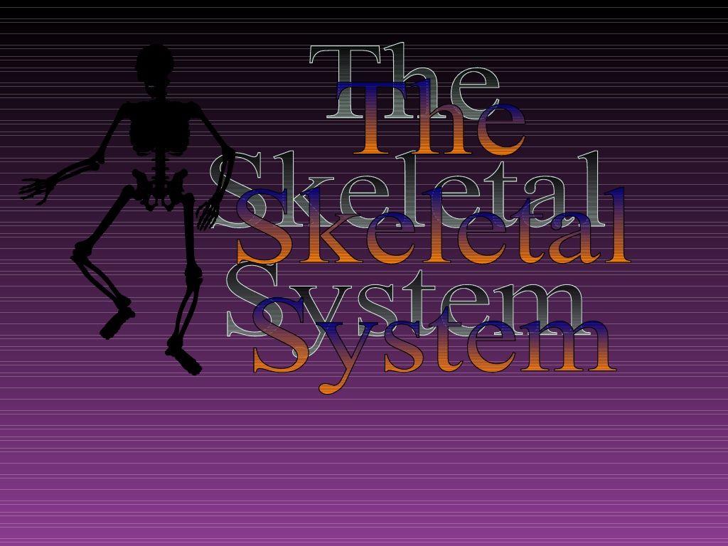 The Skeletal System By Dfugate Via Slideshare