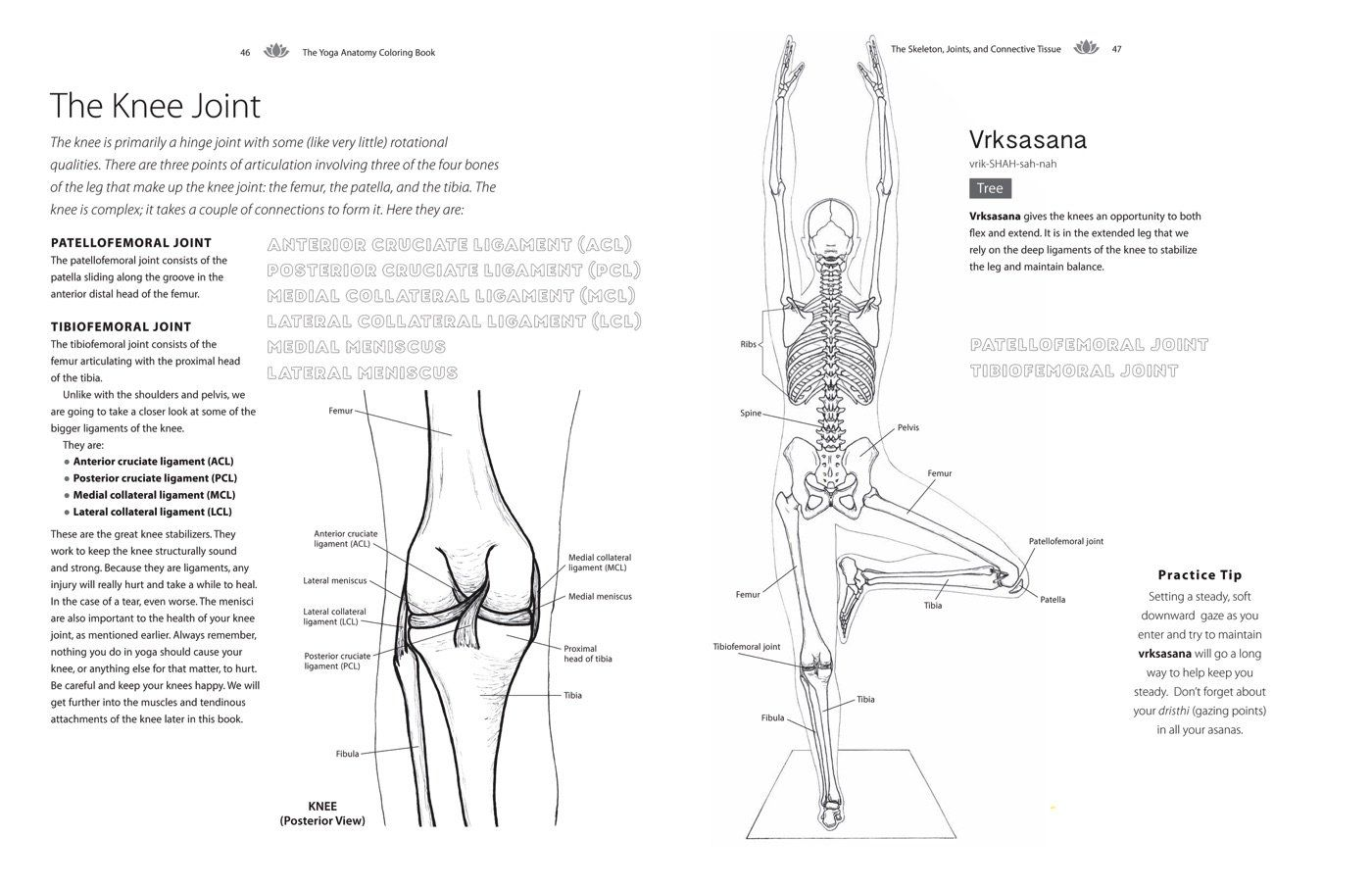The Yoga Anatomy Coloring Book A Visual Guide To Form Function And Movement Kelly Solloway Samantha Stut Anatomy Coloring Book Coloring Books Yoga Anatomy