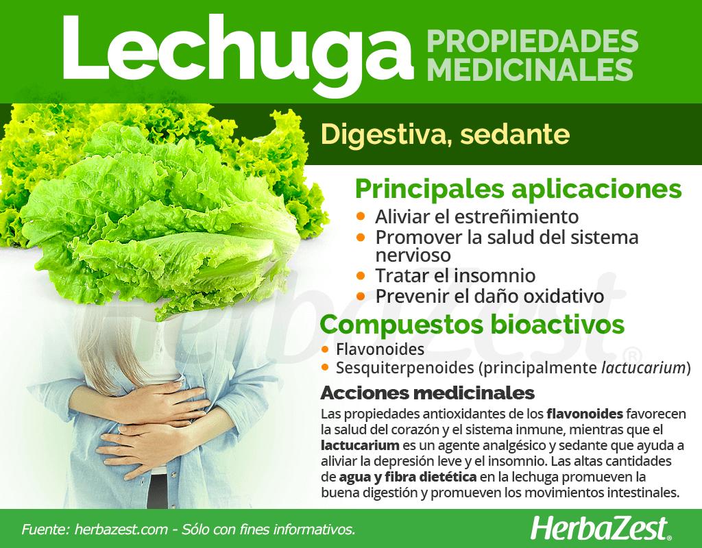 La Lechuga Es Una Verdura Tremendamente Versatil Con Gran Valor Nutricional Y Propieda Hierbas Curativas Beneficios De La Lechuga Frutas Y Verduras Beneficios