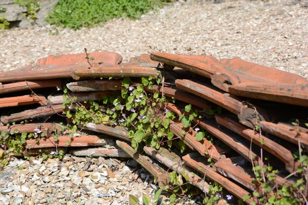 Miniatuur tuin afgrenzing van het terras van for Intratuin s gravenzande