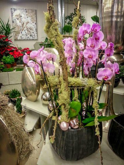 Orchideen im gl ck orchideen phalaenopsis pflanzung wohngestaltung dekoelement - Dekoration mit orchideen ...
