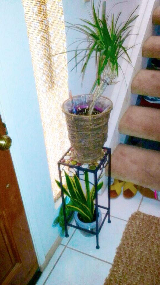 House plant decor