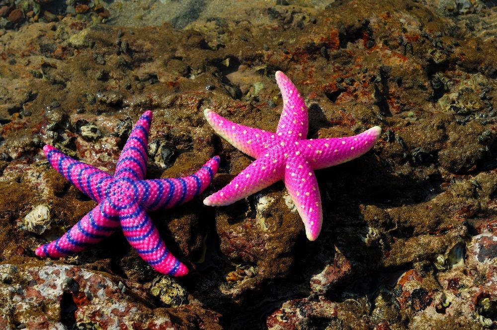 Starfish - Lessons - Tes Teach