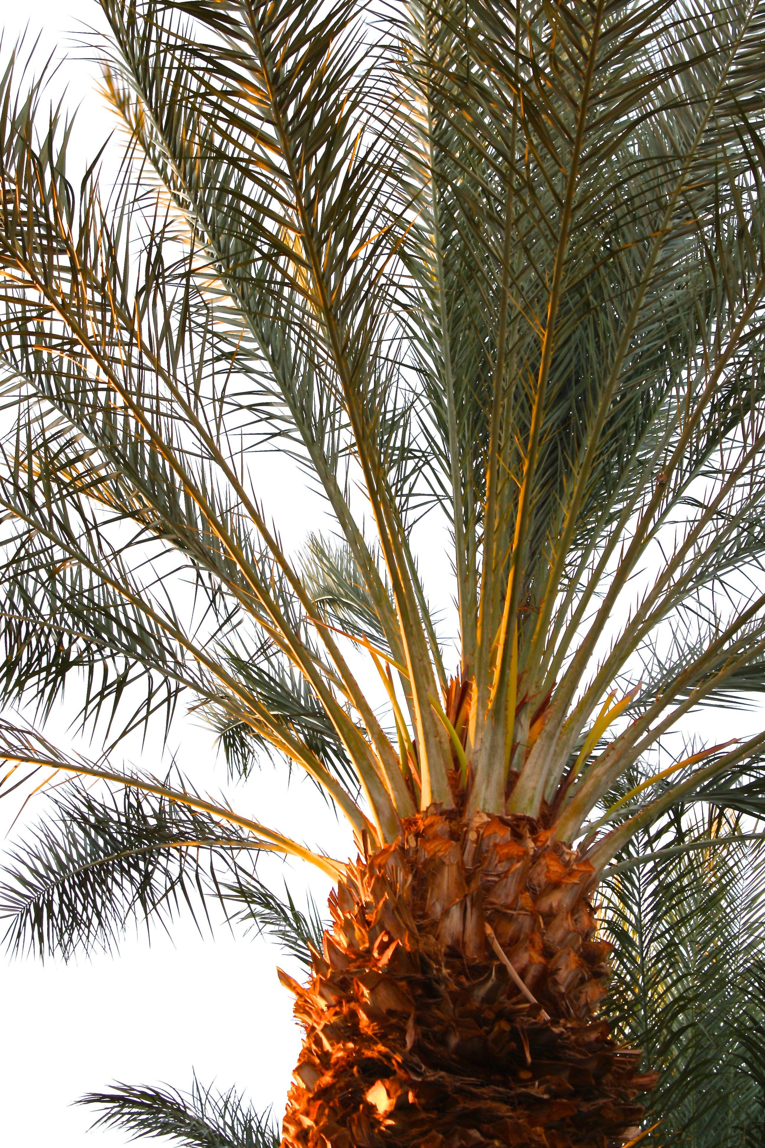 Palm Springs Palm Springs Plants Palm