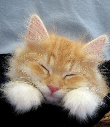 Adorable Orange Cat With Fluffy Paws Cute Animals Kittens