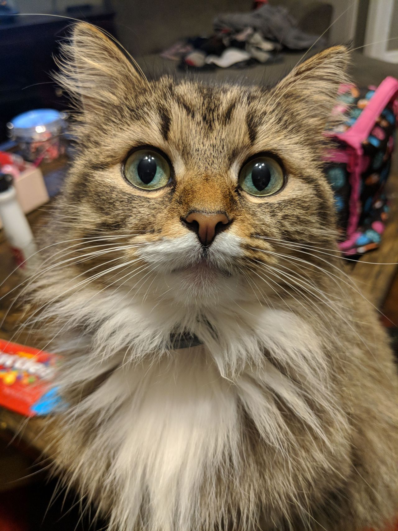 Just wanted to show off my cat she is pretty cute! by ...