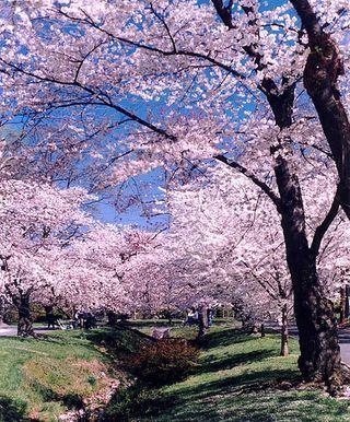 Cherry Blossom Festival Week Door County Wisconsin Wisconsin Travel Door County Wi