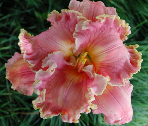 57 Amazing Beautiful Garden Ideas Inspiration And: Pin On Dream Garden