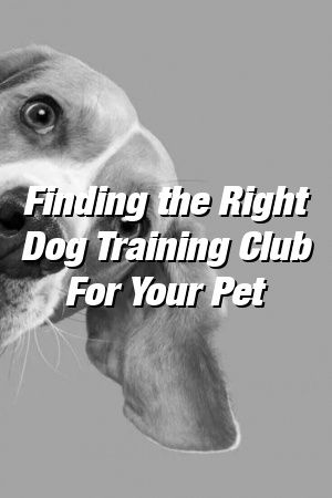 Vanessa Churchill Tells About Finding the Right Dog Training Club For Your Pet #dogs#doghome#dogslove#dogideasforthehome#dogquotes#petscats#petideas#puppyideas#doglife
