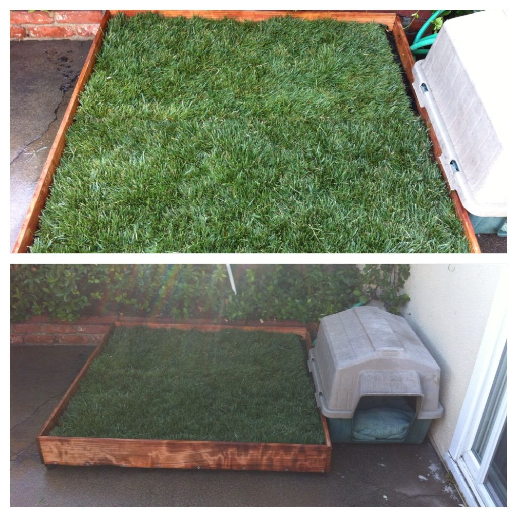 Diy potty patch for riley with real grass for about 60
