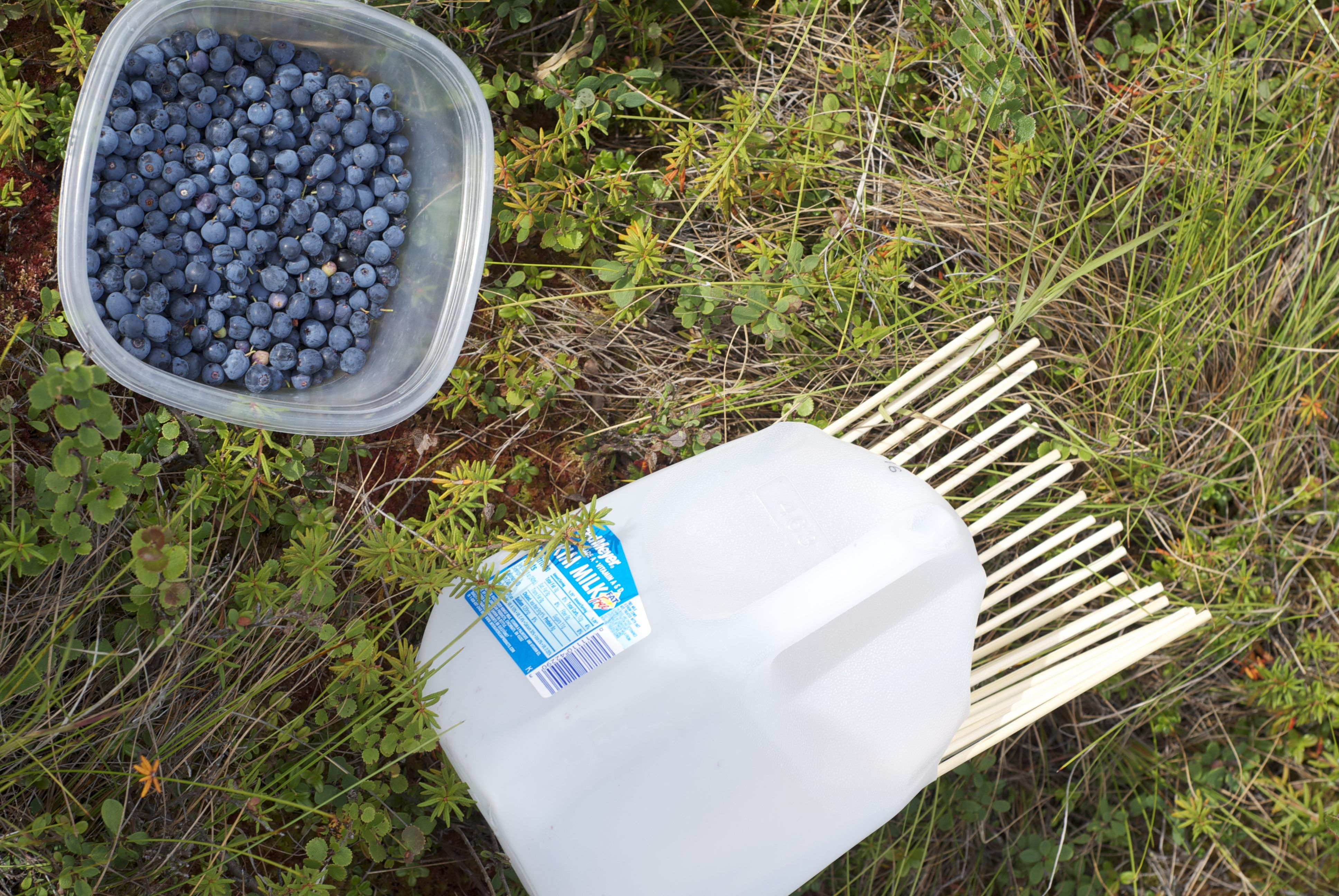 Make it easy for yourself: blueberry harvesting combines - making your own hands, factory options 59