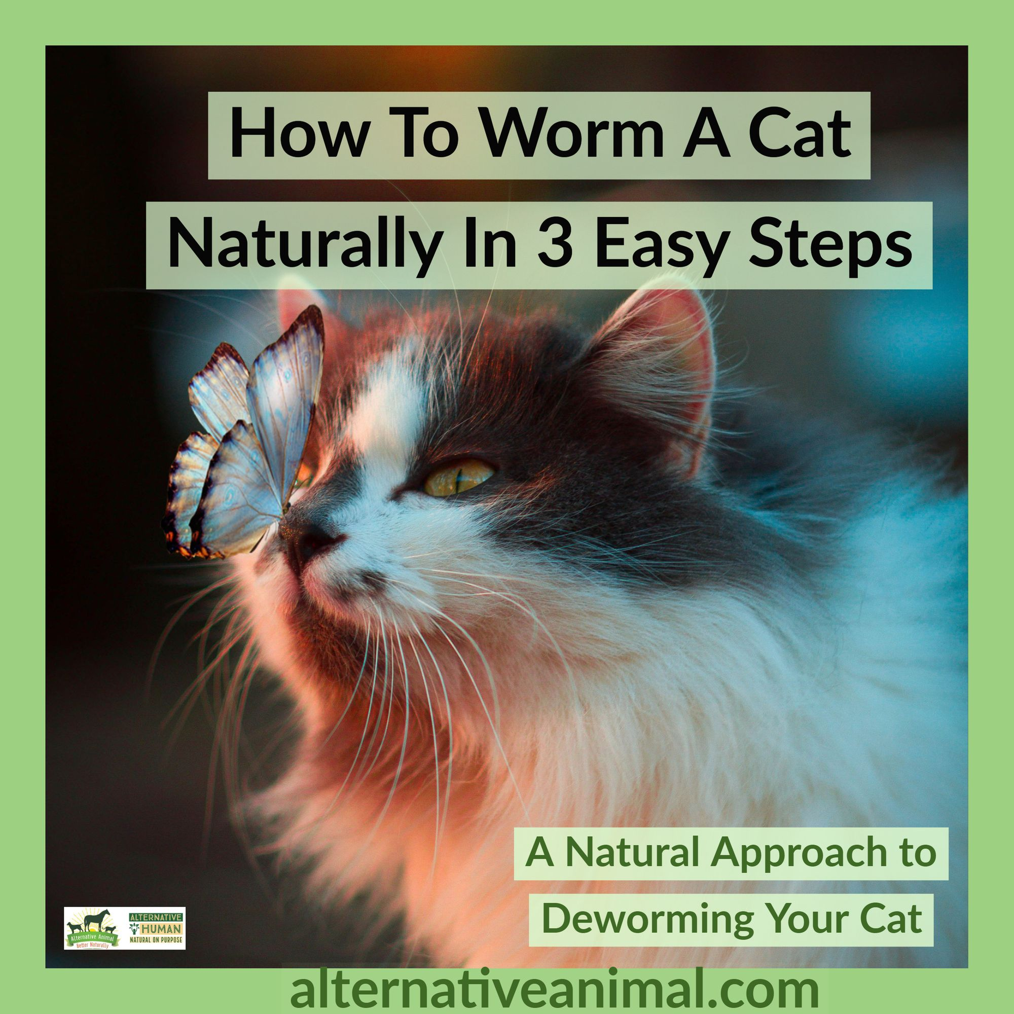How To Worm A Cat Naturally In 3 Easy Steps Alternative Animal Cat Breeds Cats Breeds