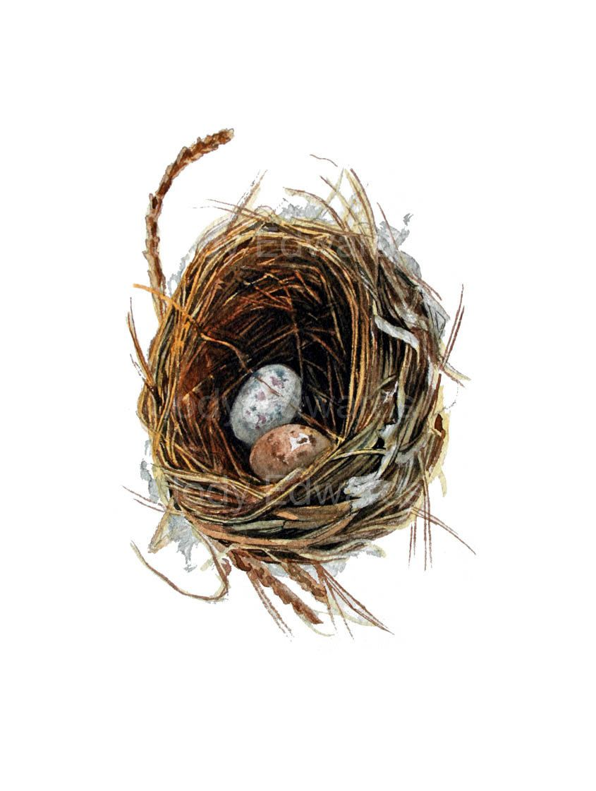 woodland nest with two eggs archival quality print based on the