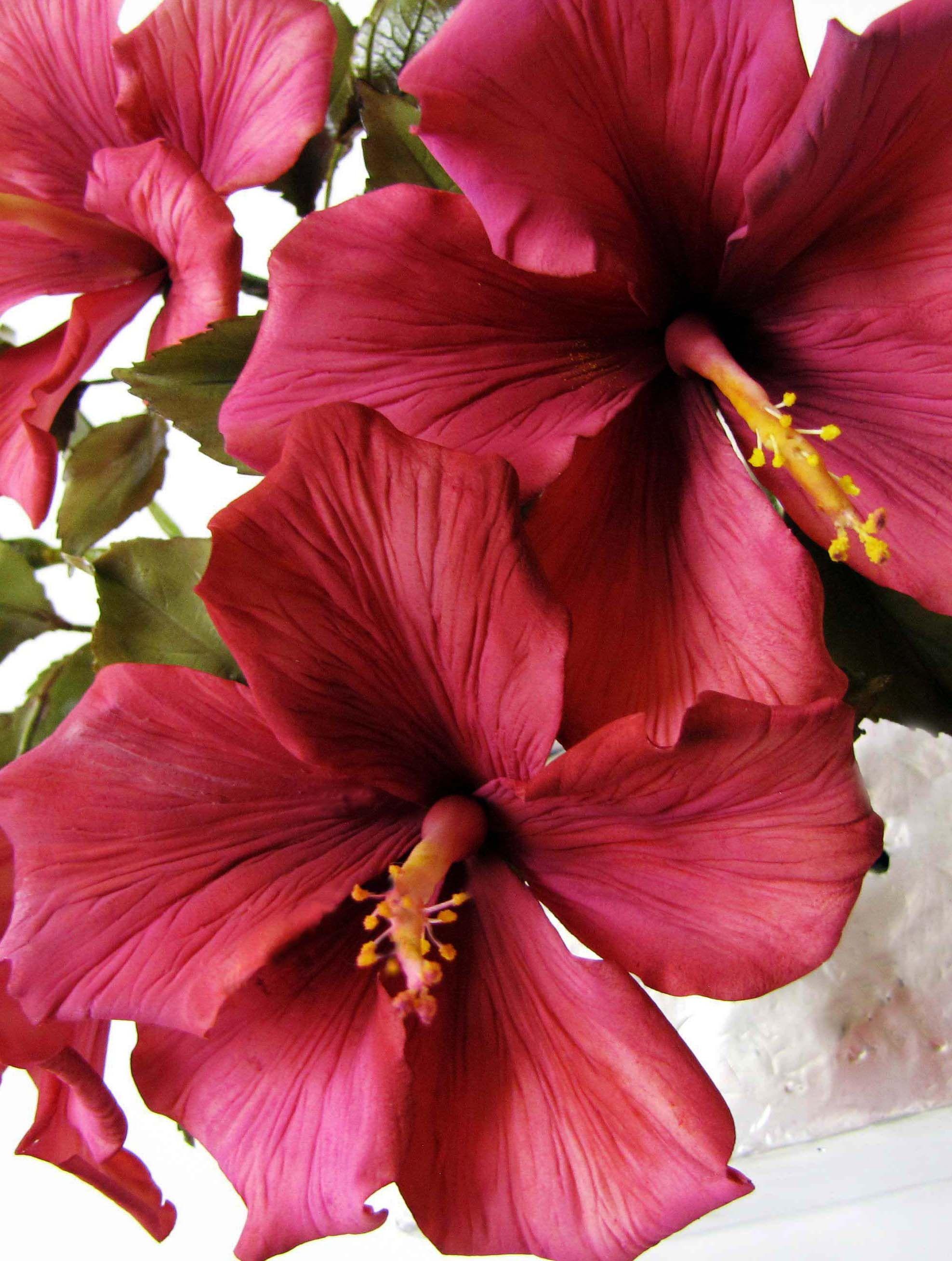 Gumpaste hibiscus cake tutorial pinterest hibiscus sugar gumpaste hibiscus izmirmasajfo