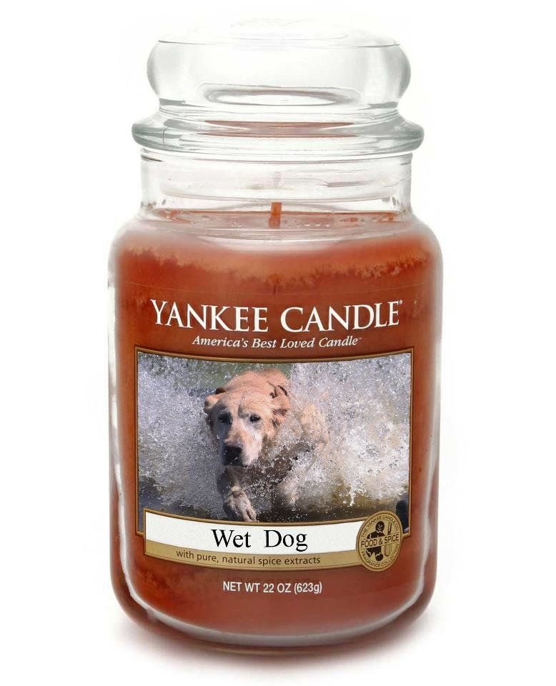 Yankee Candle Wet Dog Funny Candles Yankee Candle Funny Weird