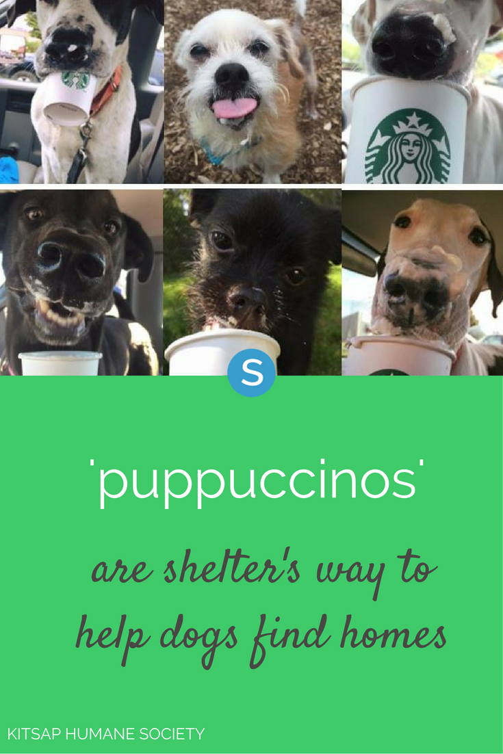 Shelter Takes Dogs For Puppuccinos To Help Them Find Homes Dogs Humane Society Love Pet