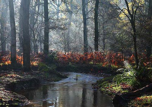 Autumn Mist Over Blackwater Reminds Me Of A Place I Used To Go To Relax Nature Photography Forest Landscape Landscape Photographers New Forest