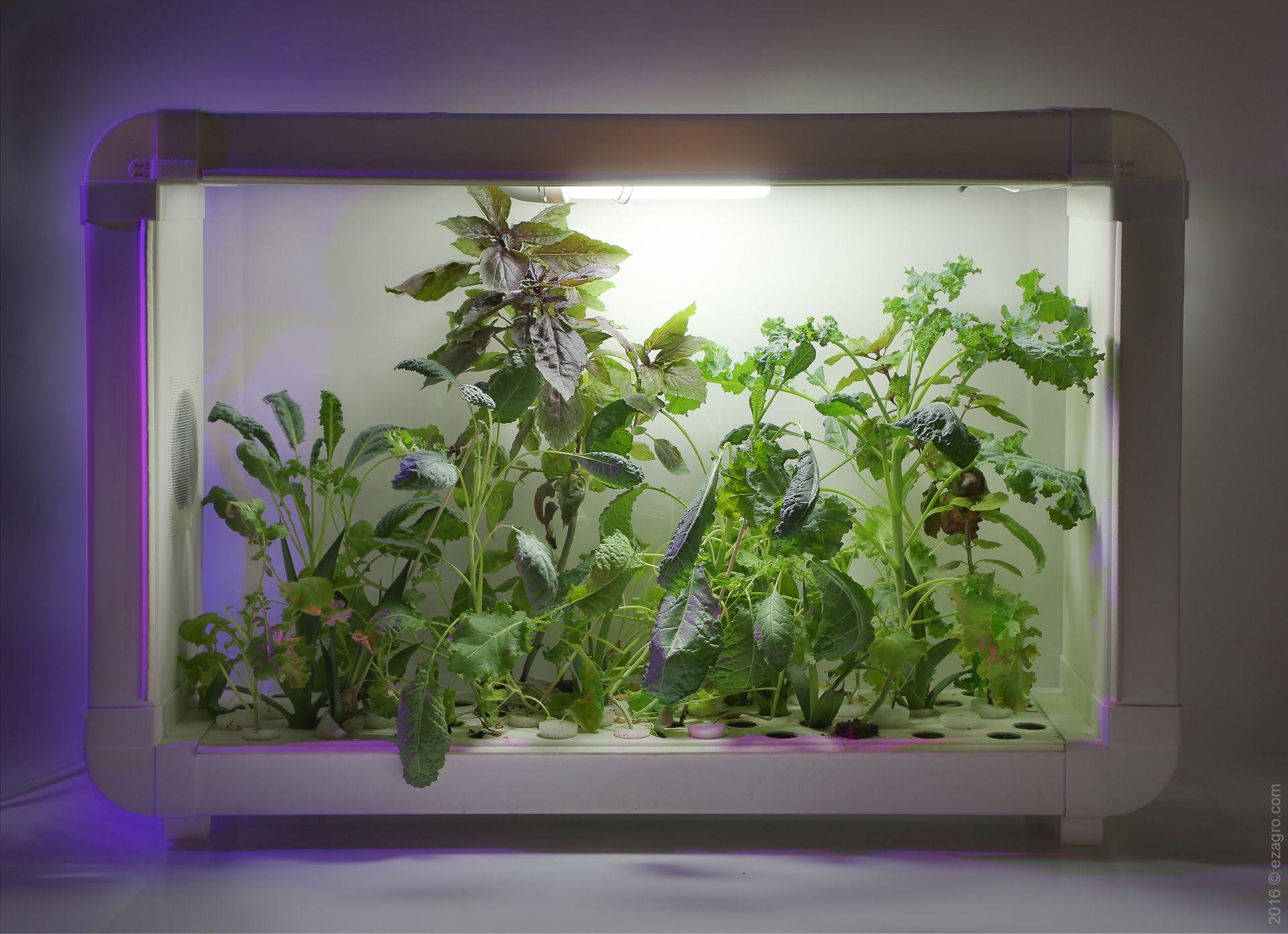hydroponics system DIY Гидропоника, Растения, Дом