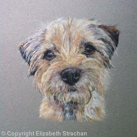 Hazel Pastel Dog Paintings Border Terrier Dog Portraits