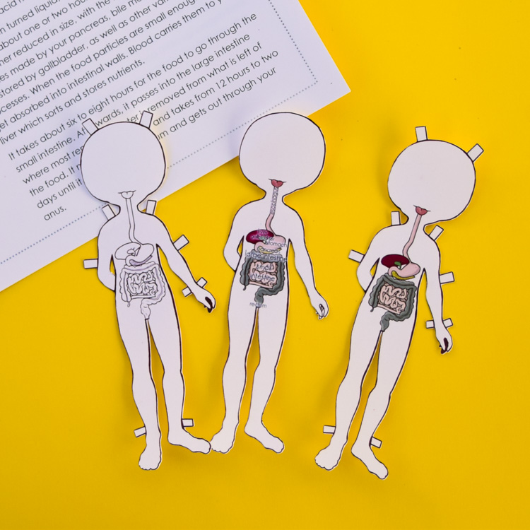 Anatomy Printable Paper Doll for Kids | Paper dolls ...