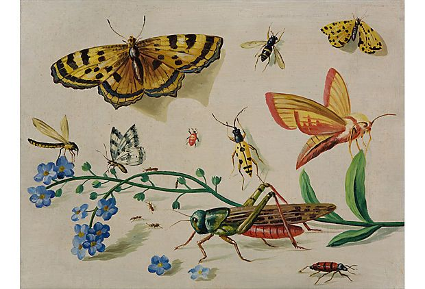 dutch touch: A painting in the style of Jan van Kessel, who is best-known for small, jewel-like pictures, often on copper, of insects or shells against a light background, executed with strong color and great exactitude.