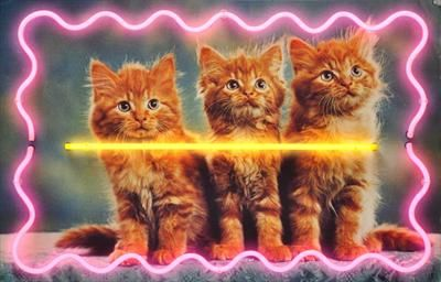neon kitties