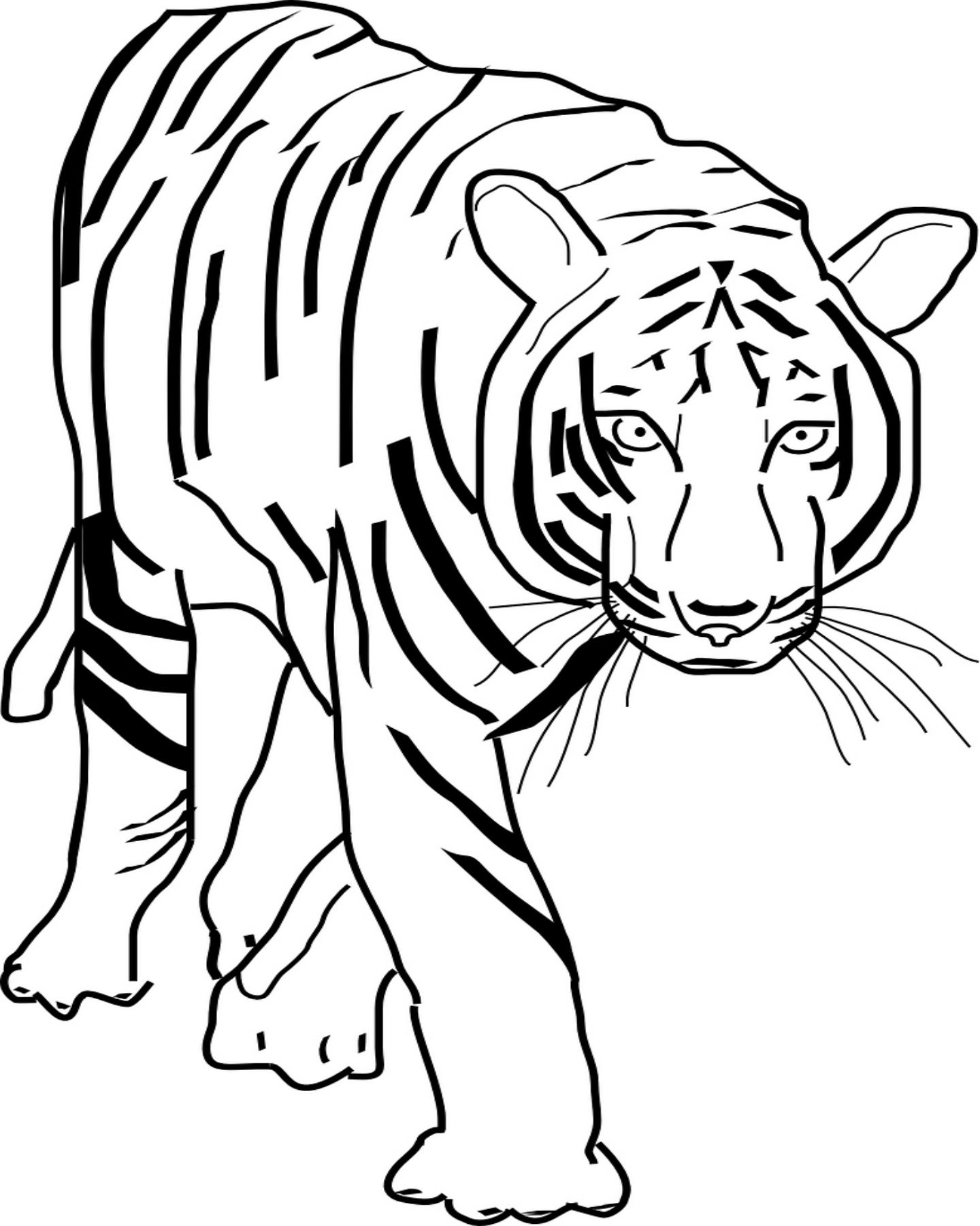 Realistic Tiger Coloring Page | Kids Corner