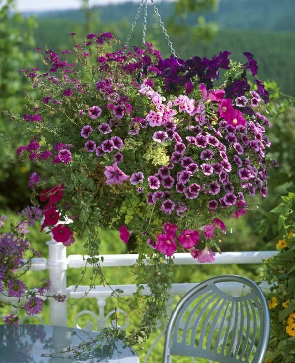 Jardiniere A Petunia Geranium Verveine Et Vergerette Garden Hints Pinterest P Tunias