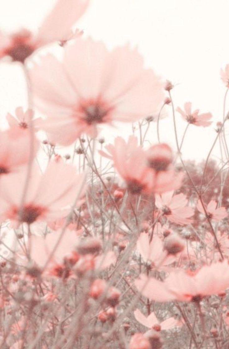 summer flower meadow in pink | ChicChicFindings.etsy.com #flowershintergrundbilder