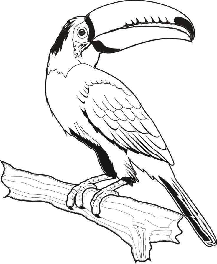 тукан птица рисунок вам окунуться