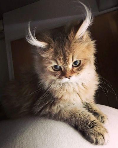 12 der schönsten Katzen der Welt – Wir lieben Katzen und Kätzchen