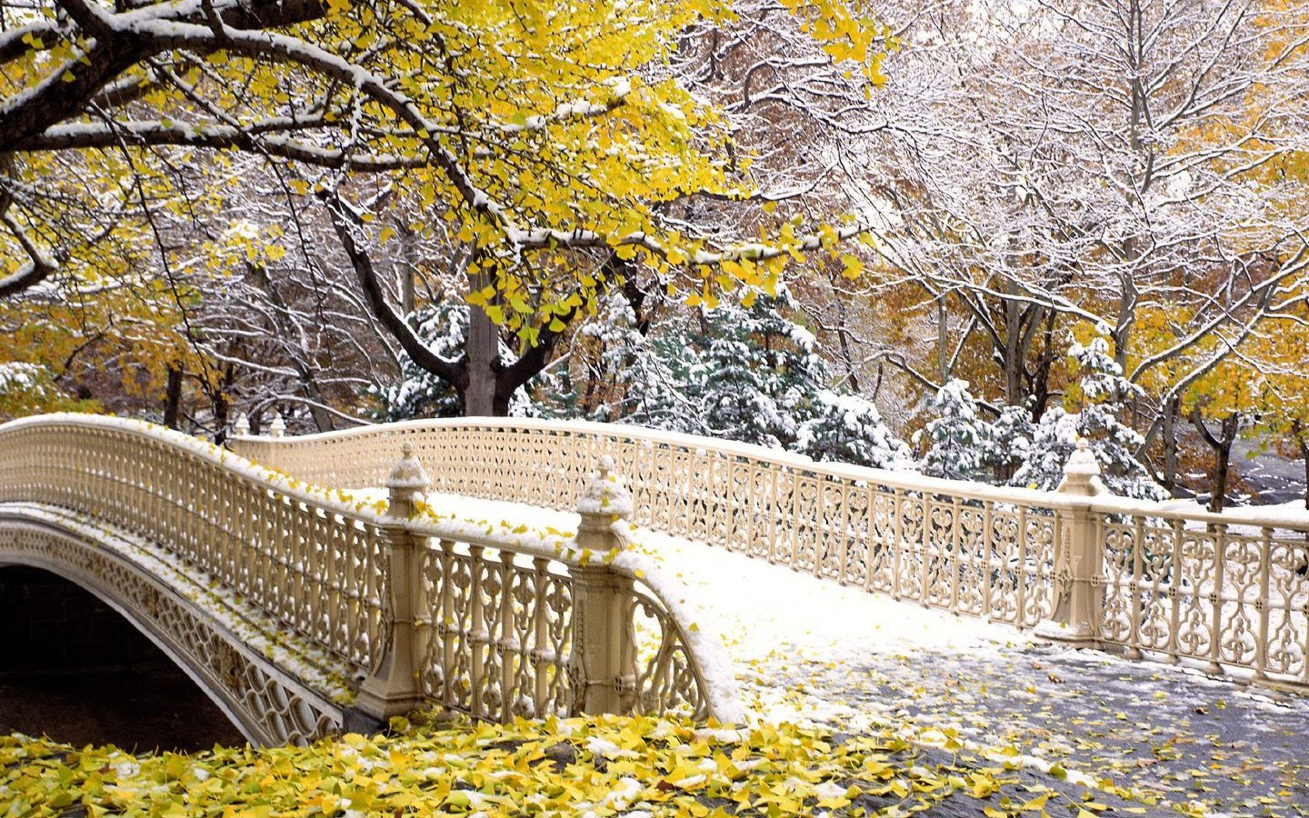 Image Downloads - The Official Website of Central Park NYC  |Autumn Central Park Screensavers