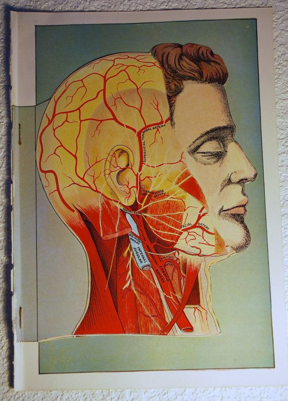 100 Vintage Medical Illustrations in Illustrations on