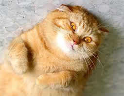 Ben ik mooi? Ben ik lief?