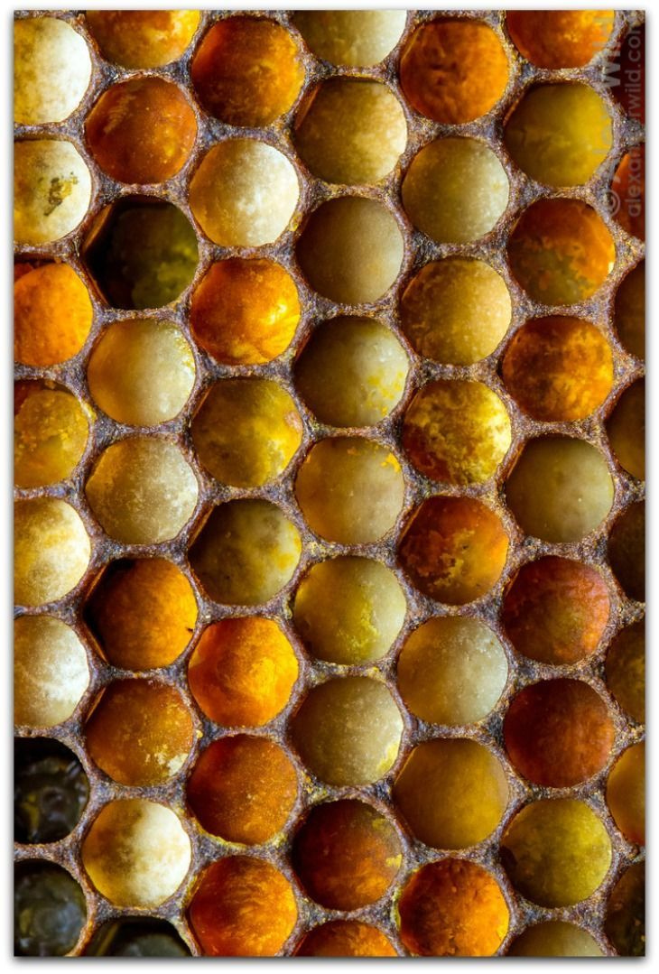 honey bee architecture of the hive beekeeping pinterest