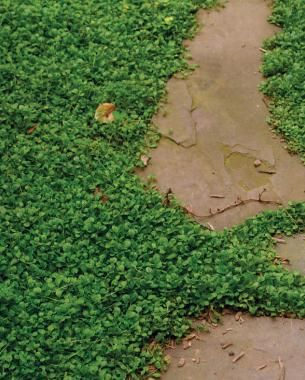 Low-Maintenance Alternatives to Lawns | Grass alternative ...
