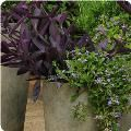 great site for container gardening.  Contains pictures, plant info and a planting guide.