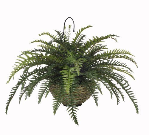 House Of Silk Flowers Artificial Boston Fern Hanging Basket Http Www Dp B0051gqsju Ref Cm Sw R Pi Erzsb0nz2vn2afs