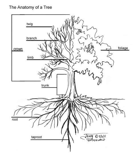 Emg Zine Dryads And Trees Tree Drawing Tree Roots Tree