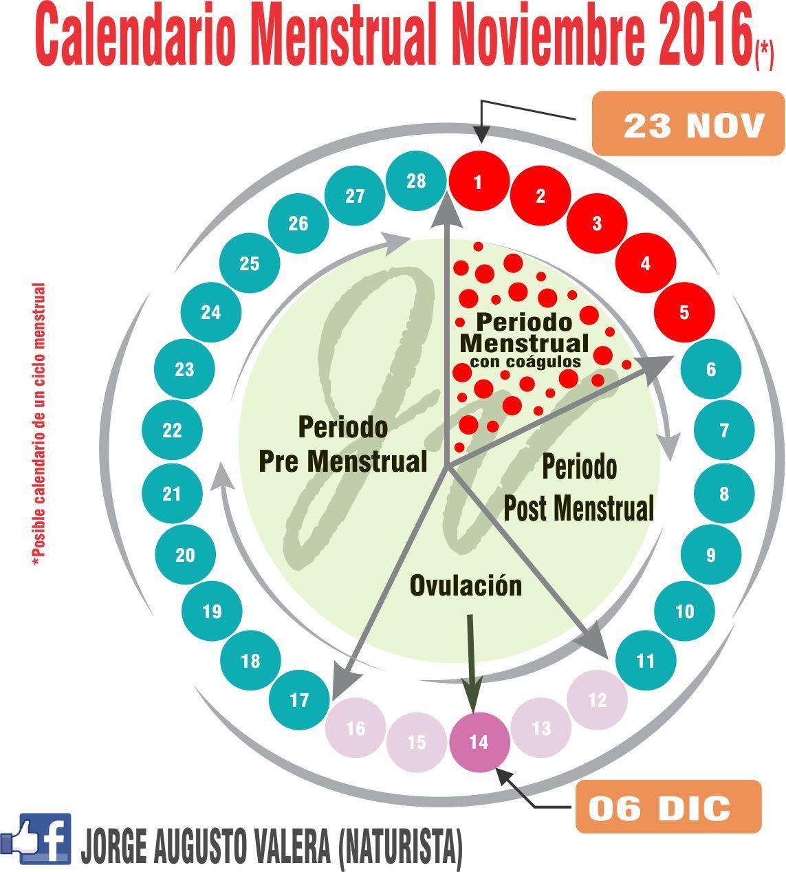 Miomas Ciclo Menstrual Analisis De Embarazo Ciclo Menstrual Uterina